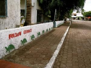 Galapagoes134