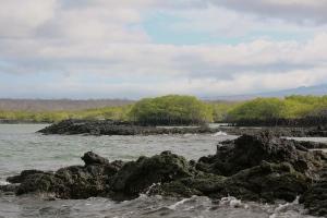 Mangrove Swamp area on Santa Cruz