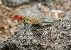 Galapagos131