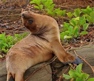 Galapagos15