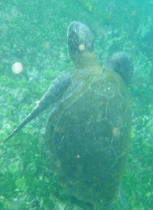 Galapagos21
