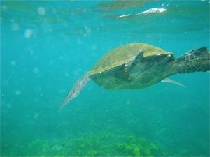 Galapagos22