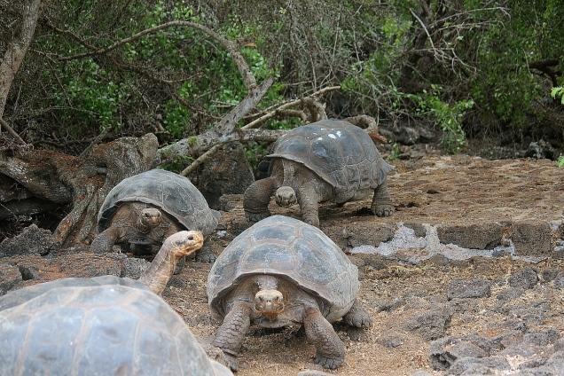 Galapagos40