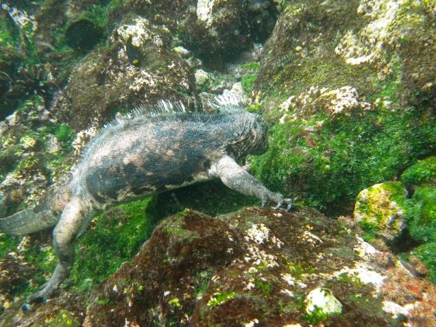 Galapagos5