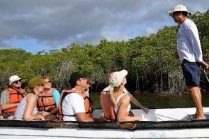 In mangrove swamp area